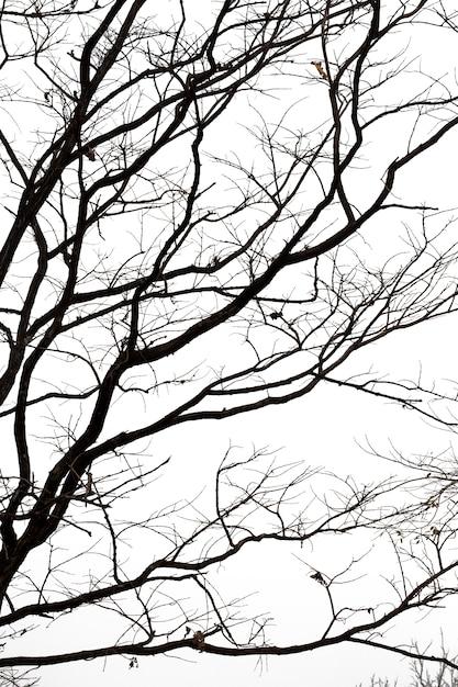 Branches Mortes, Arbre Mort Silhouette Ou Arbre Sec Sur Fond Blanc Avec Un Tracé De Détourage. Photo Premium