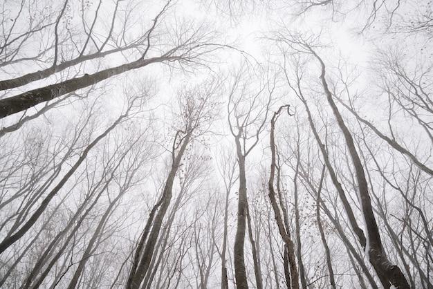 Branches nues des arbres dans la forêt d'hiver Photo Premium