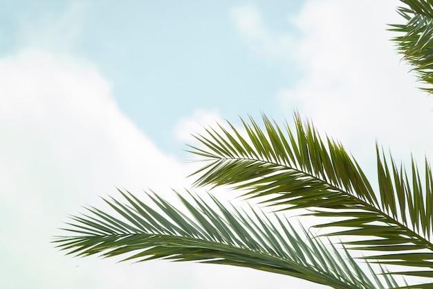 Branches de palmier et feuilles de feuillage sous le ciel. Photo Premium
