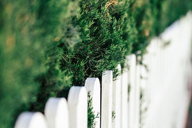 Branches De Pin Et Clôture En Bois Blanc Photo gratuit