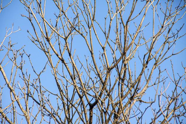 Branches sèches d'un arbre avec un ciel bleu à rio de janeiro. Photo Premium