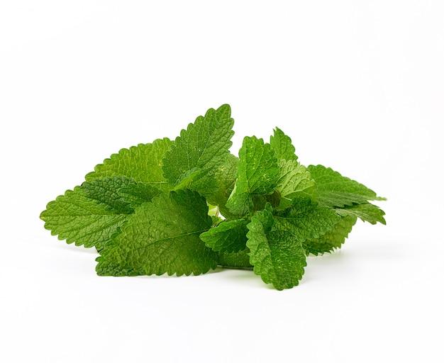 Brin de menthe aux feuilles vertes sur fond blanc Photo Premium