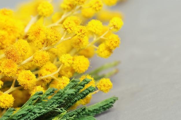 Brindilles de fleurs jaunes duveteuses de mimosa gros plan sur un fond gris flou avec l'espace de la copie. Photo Premium