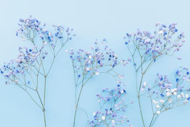 Brindilles Fraîches De Petites Fleurs Bleues Photo gratuit