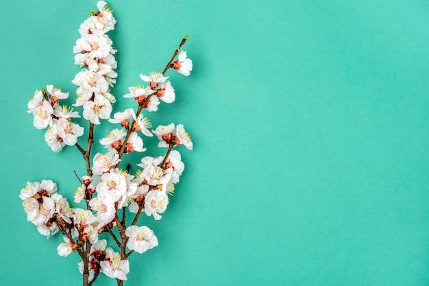 Brins De L'abricotier Avec Des Fleurs Sur Fond Bleu Photo Premium
