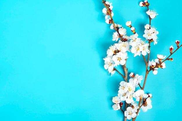 Brins de l'abricotier avec des fleurs sur fond bleu. Photo Premium