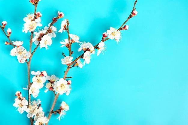 Brins D'abricotier Avec Des Fleurs Sur Fond Bleu. Photo Premium