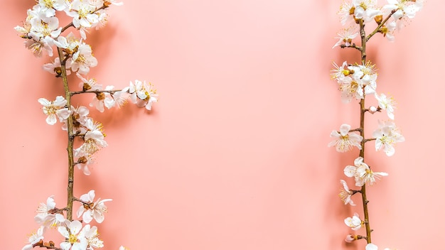Brins de l'abricotier avec des fleurs en rose Photo Premium