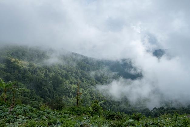 Brouillard, dans, forêt, montagne, thaïlande Photo gratuit