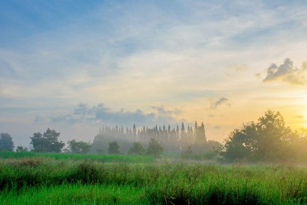 Brouillard du matin en hiver. Photo Premium