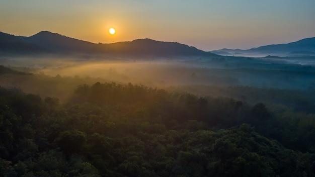 Brouillard, vue aérienne, sur, forêt Photo Premium