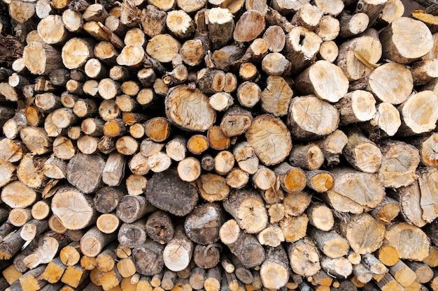 Bûche de bois coupé de fond Photo gratuit