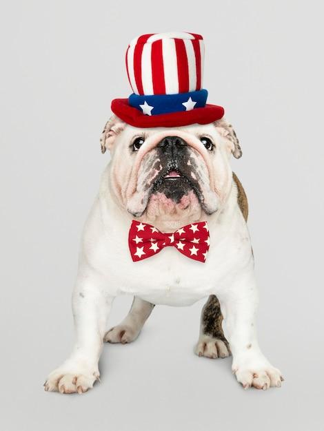 Bulldog Anglais Des Etats-unis Photo gratuit