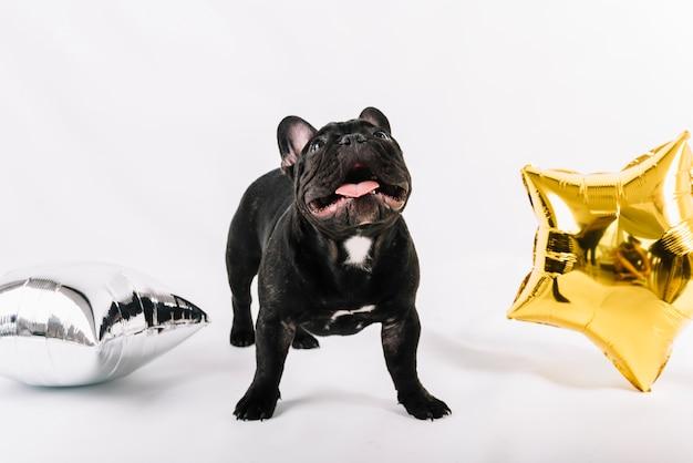Bulldog charmant posant avec des éléments du parti Photo gratuit