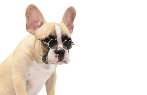 Bulldog français mignon lunettes de soleil isolé Photo Premium
