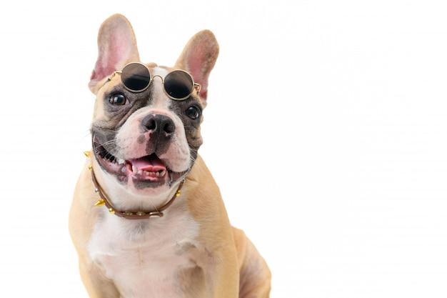 Bulldog français mignon porter des lunettes et assis isolé Photo Premium