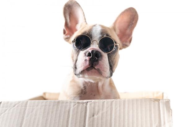 Bulldog français mignon porter des lunettes de soleil dans une boîte en papier Photo Premium