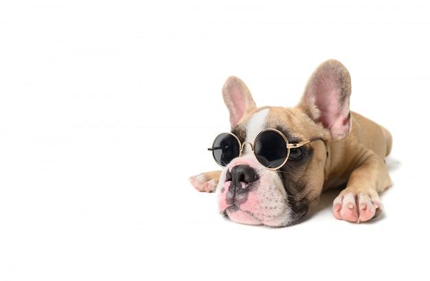 Bulldog français mignon porter des lunettes de soleil Photo Premium