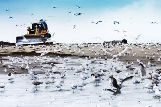 Bulldozer sur la plage Photo gratuit