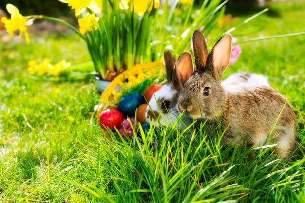 Bunny de pâques sur prairie avec panier et œufs Photo Premium