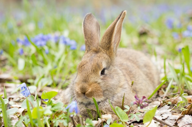 Bunny Sur Un Pré En Fleurs. Lièvre Dans Une Clairière De Fleurs Bleues Photo Premium