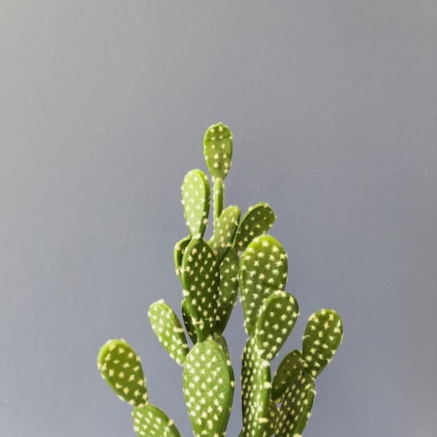 Bureau cactus Photo gratuit