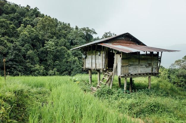 Cabane dans une rizière en thaïlande Photo gratuit