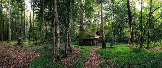 Cabane verte en forêt Photo Premium