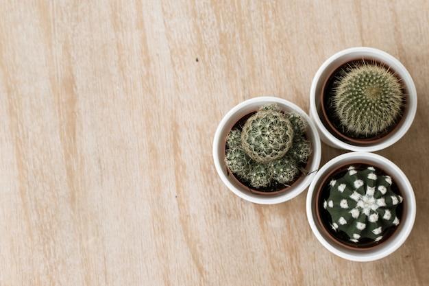 Cactus d'arbre sur un fond en bois avec espace Photo Premium