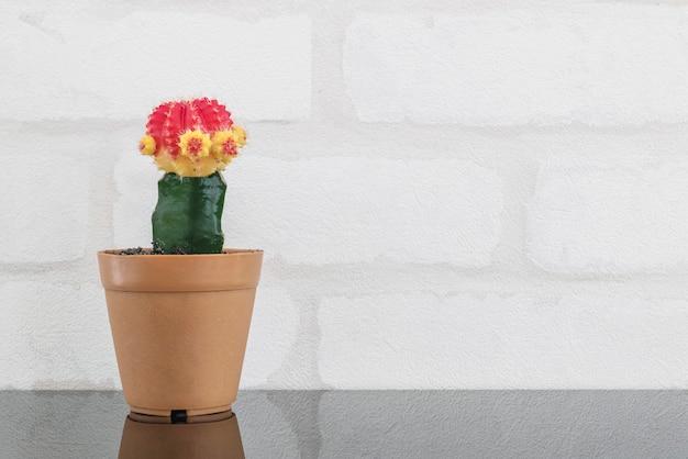Cactus de couleur fraîche closeup dans un pot en plastique brun pour décorer sur une table en verre noir et mur de briques blanches fond texturé avec espace de copie Photo Premium