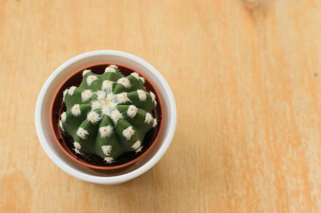 Cactus dans un pot sur un fond en bois. concept de minimalisme Photo Premium
