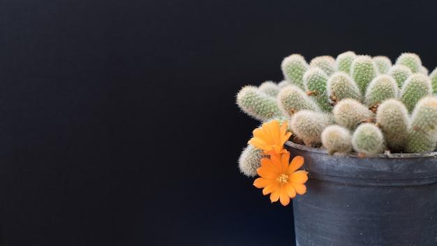 Cactus dans un pot sur fond de tableau noir, plante succulente Photo Premium