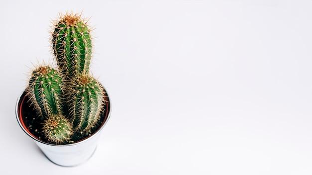 Cactus sur fond blanc Photo gratuit