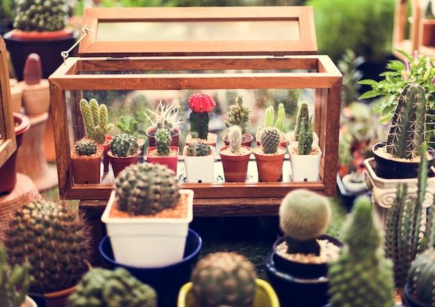 Cactus houseplant collection ensemble de décoration Photo gratuit