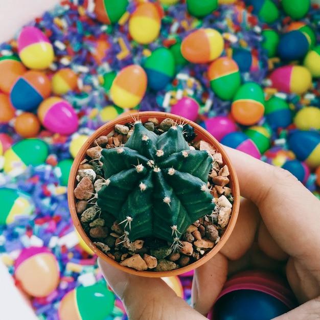 Cactus et jouets colorés Photo gratuit