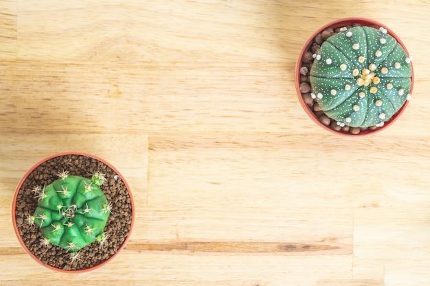 Cactus ou plantes succulentes dans le pot sur le fond de table de bureau en bois Photo Premium