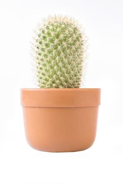 Cactus en pot marron sur fond blanc isolé Photo Premium
