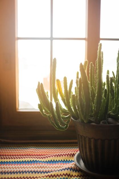 Cactus en pot sur le rebord de la fenêtre Photo gratuit