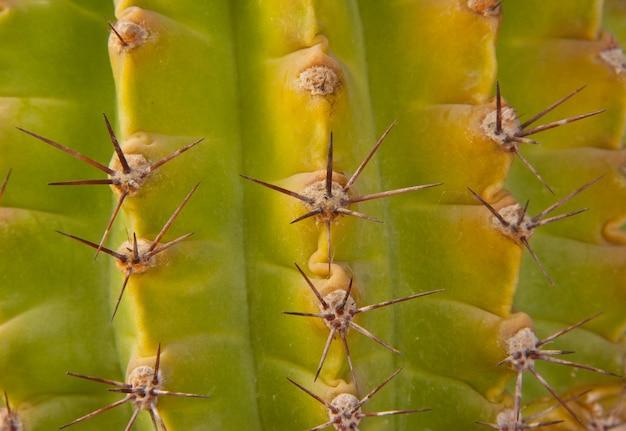 Cactus Vert Photo Premium
