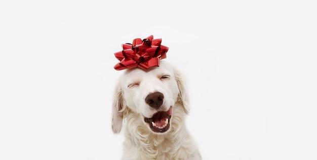 Cadeau de chien heureux pour noël, anniversaire ou anniversaire, portant un ruban rouge sur la tête. isolé Photo Premium