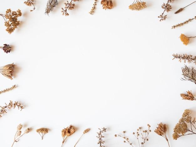 Cadre D'automne De Différentes Plantes Et Fleurs Séchées Sur Fond Blanc. Vue De Dessus. Mise à Plat. Copie Espace Photo Premium