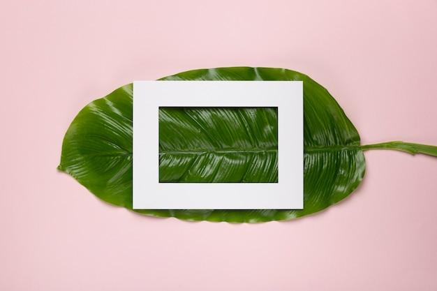 Cadre blanc sur feuille verte Photo gratuit