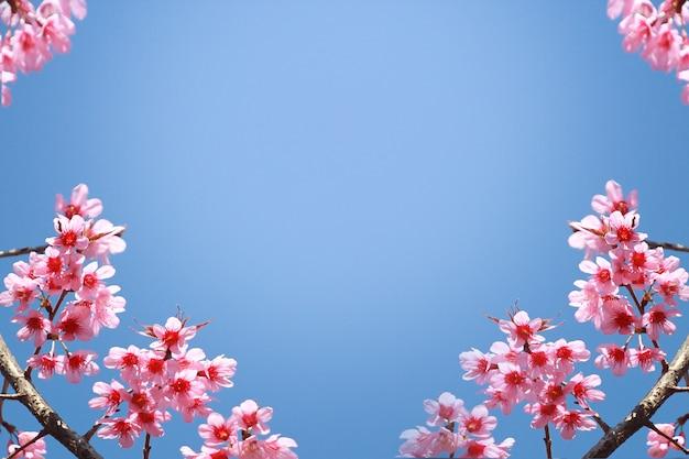 Cadre de branches de cerisier en fleurs sur fond de ciel bleu et papillons flottant au printemps sur la nature en plein air Photo Premium