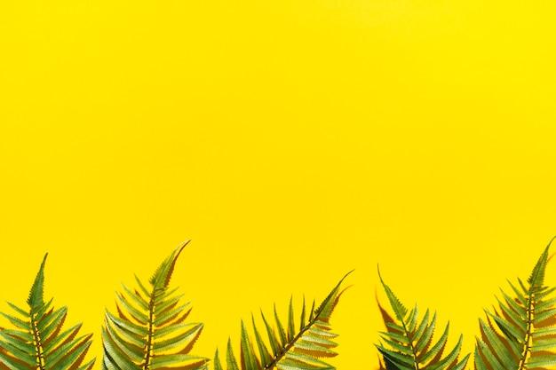 Cadre de branches de palmier Photo gratuit