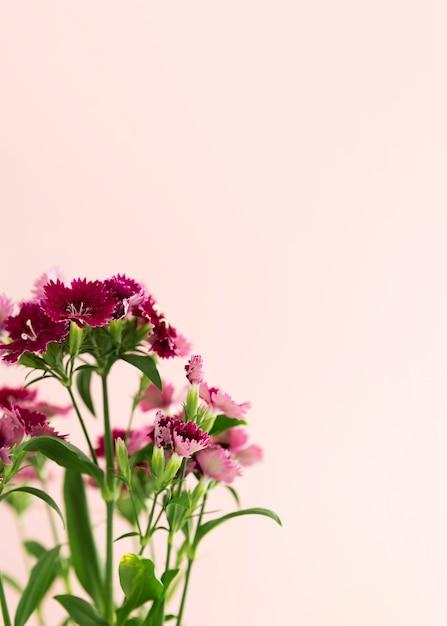 Cadre Floral Avec Fond Rose Et Copie-espace Photo gratuit