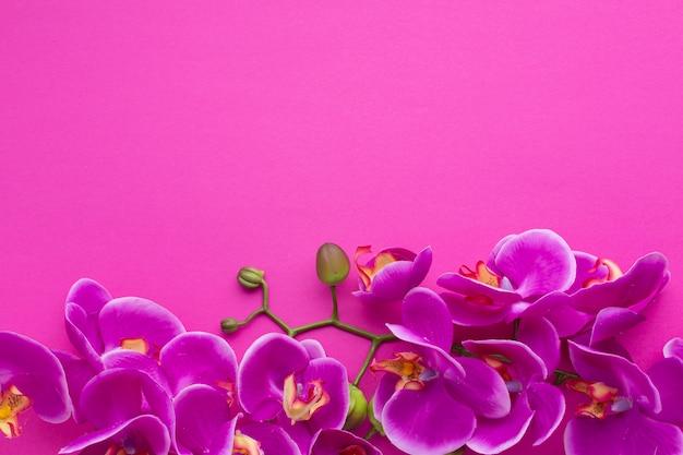 Cadre mignon avec fond rose puissant Photo gratuit