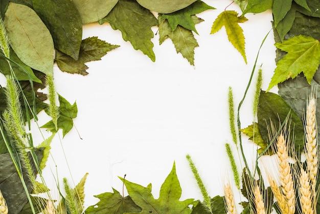 Cadre naturel de feuilles Photo gratuit