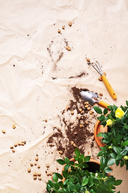 Cadre d'outils de jardinage avec mini roses dans des pots avec espace de copie. transplanter des plantes. Photo Premium