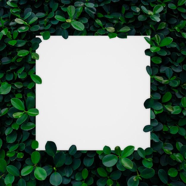 Cadre de papier blanc sur fond de mur de feuilles vertes Photo Premium