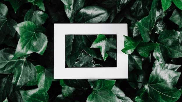 Cadre photo hallow sur plante à feuilles vertes Photo gratuit